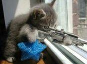 assassincat2.jpg
